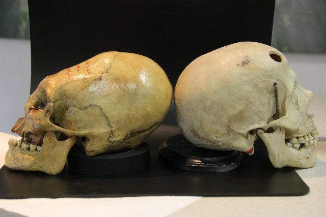 Nephilim Skull Comparison