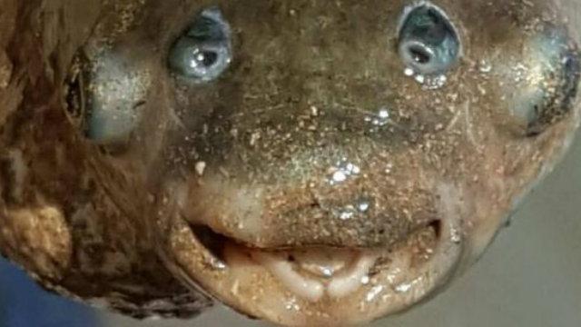 Weird Four Eyed Fish 5